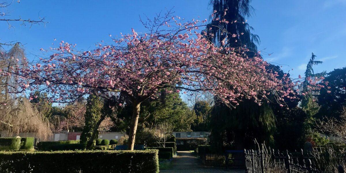 Forår på Nørrebro