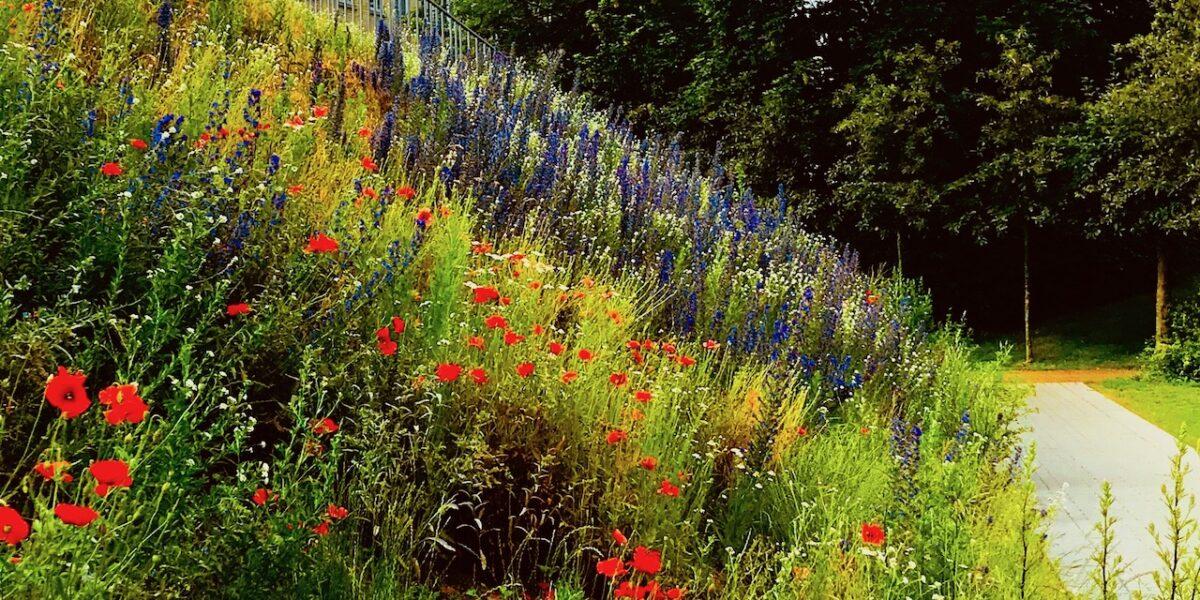 Ugens sommerfoto: Vildt blomsterflor i Korsgade