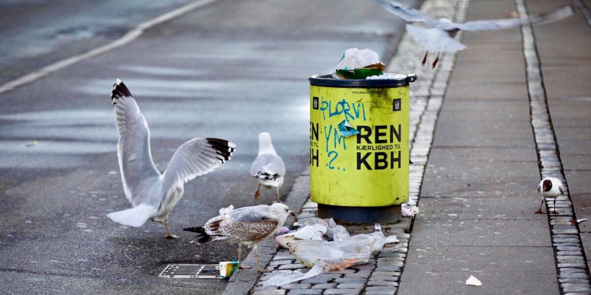 Skraldestrid afgjort: Jo, der er færre skraldespande på Nørrebro!