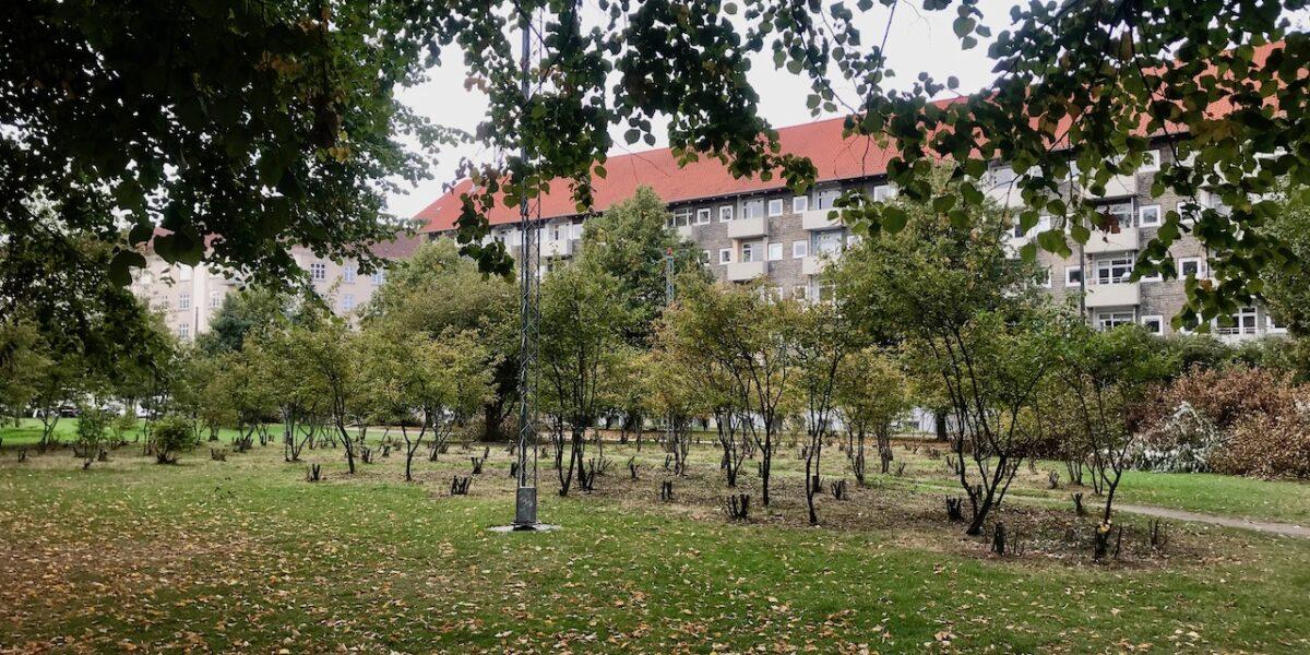 Politiet bekræfter: Beskæring af buske skyldes parkens pushere